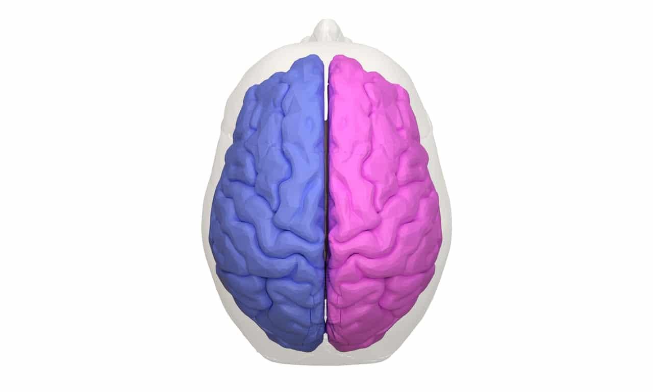 hemisferios del cerebro: trastornos vs enfermedades mentales