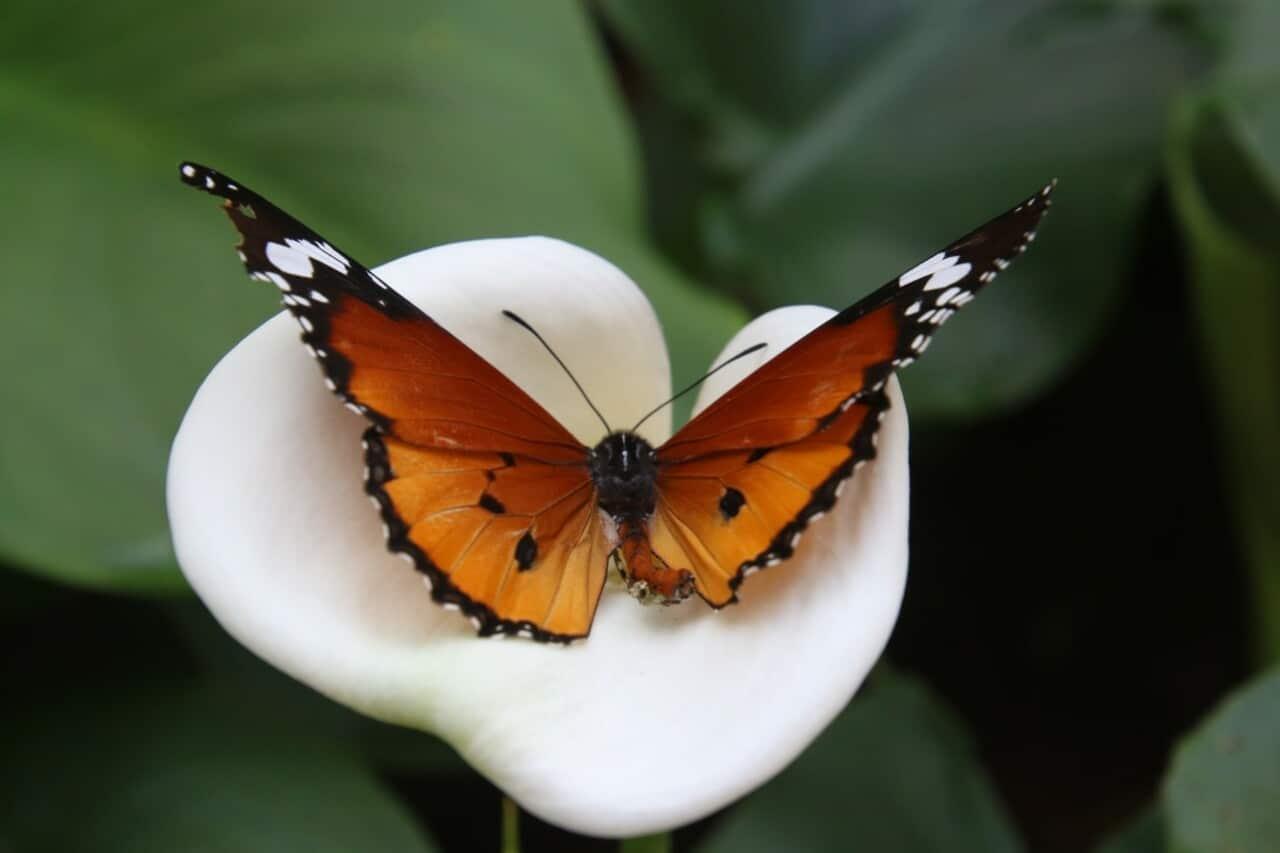 metamorfosis mariposa: esperanza