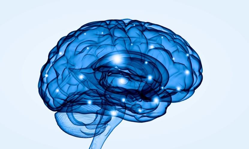 cerebro humano en color azul