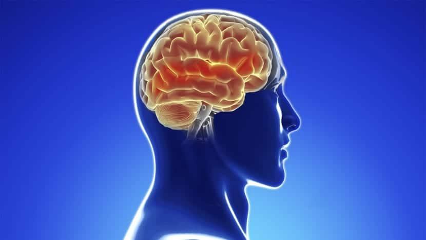 barrera que protege el cerebro