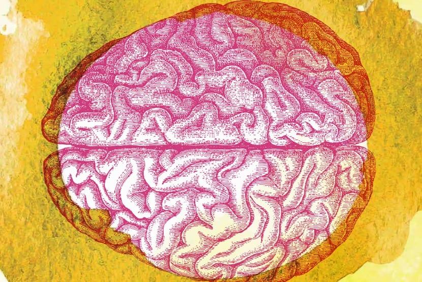 cerebro humano protegido