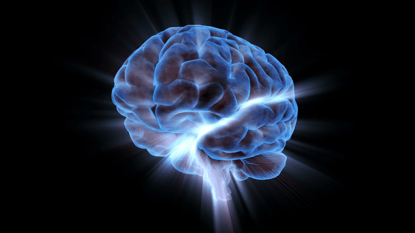 Diferentes partes del cerebro y córtex cerebral
