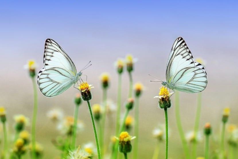 simbolo de mariposa en coaching wingwave