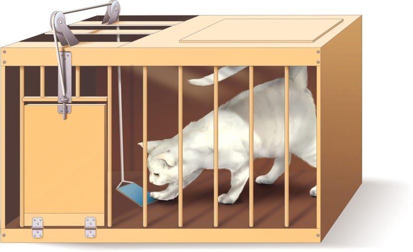 experimento con gatos