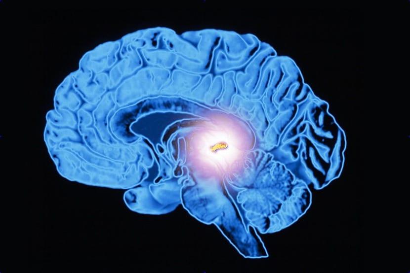 situacion de la glandula pineal en el cerebro
