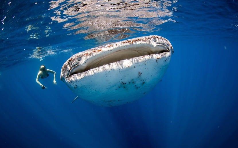 nadar junto a animales marinos